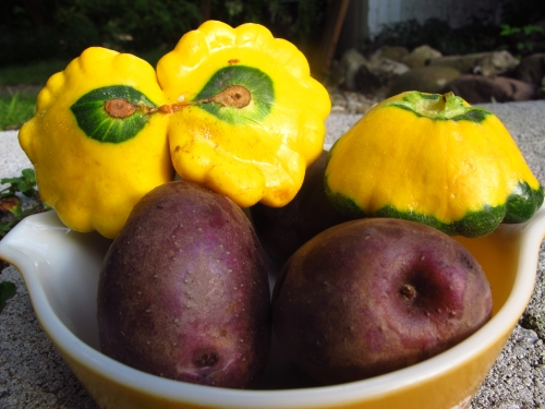 Cooking with Pattypan Squash - Sweet and Savoring