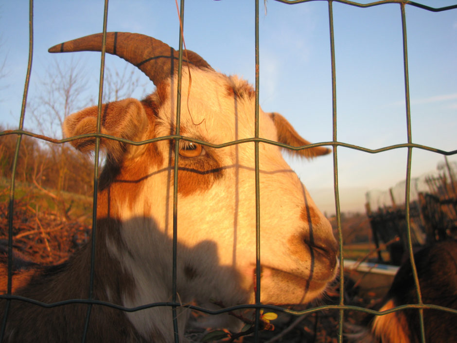 Animals of Emilia Romagna, Italy - Sweet and Savoring